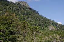 Bosques de Chile