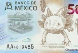 ajolote billete 50 pesos